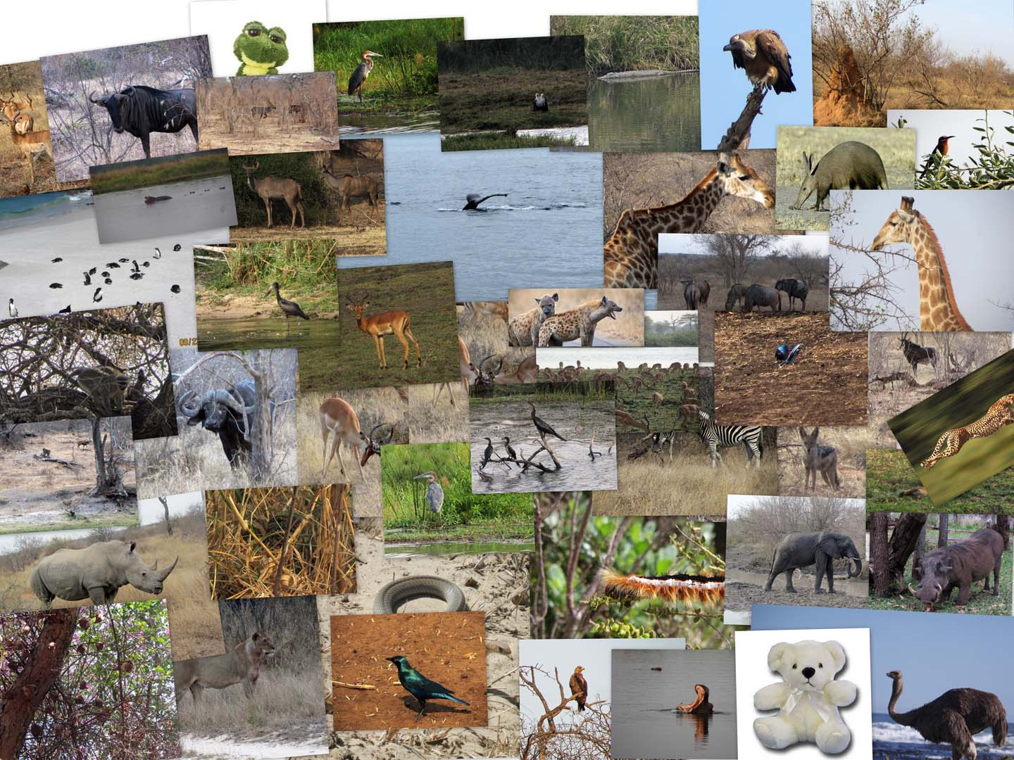 Collage of animal photos