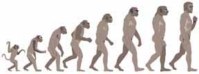 Stages of human evolution