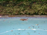 Pool with mother duck and ducklings close by